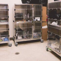Cat condos-06746